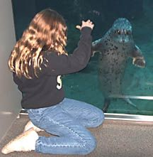 Child and seal at sealife center