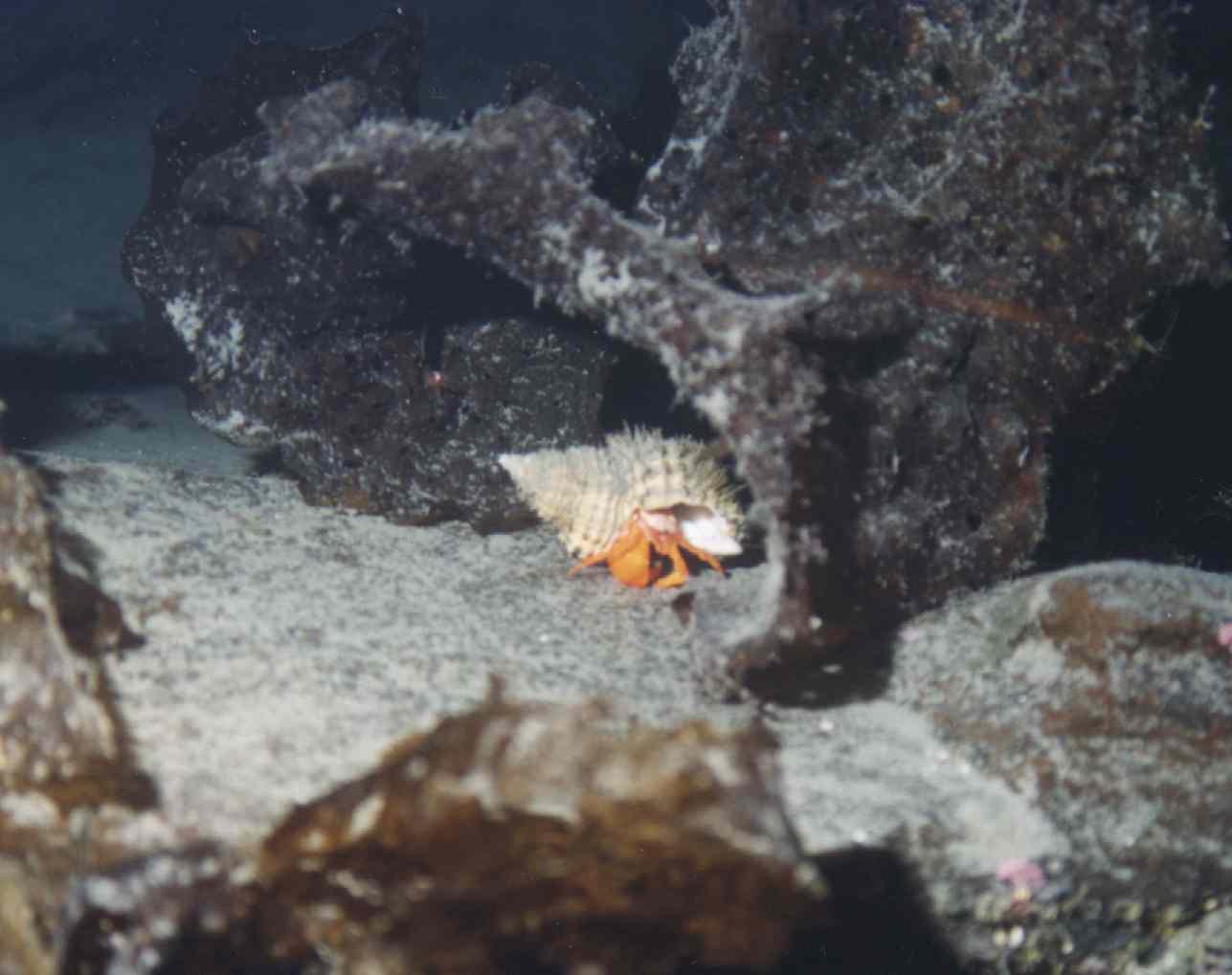 Gallery - Alaska Underwater Adventures - Anchorage, Alaska
